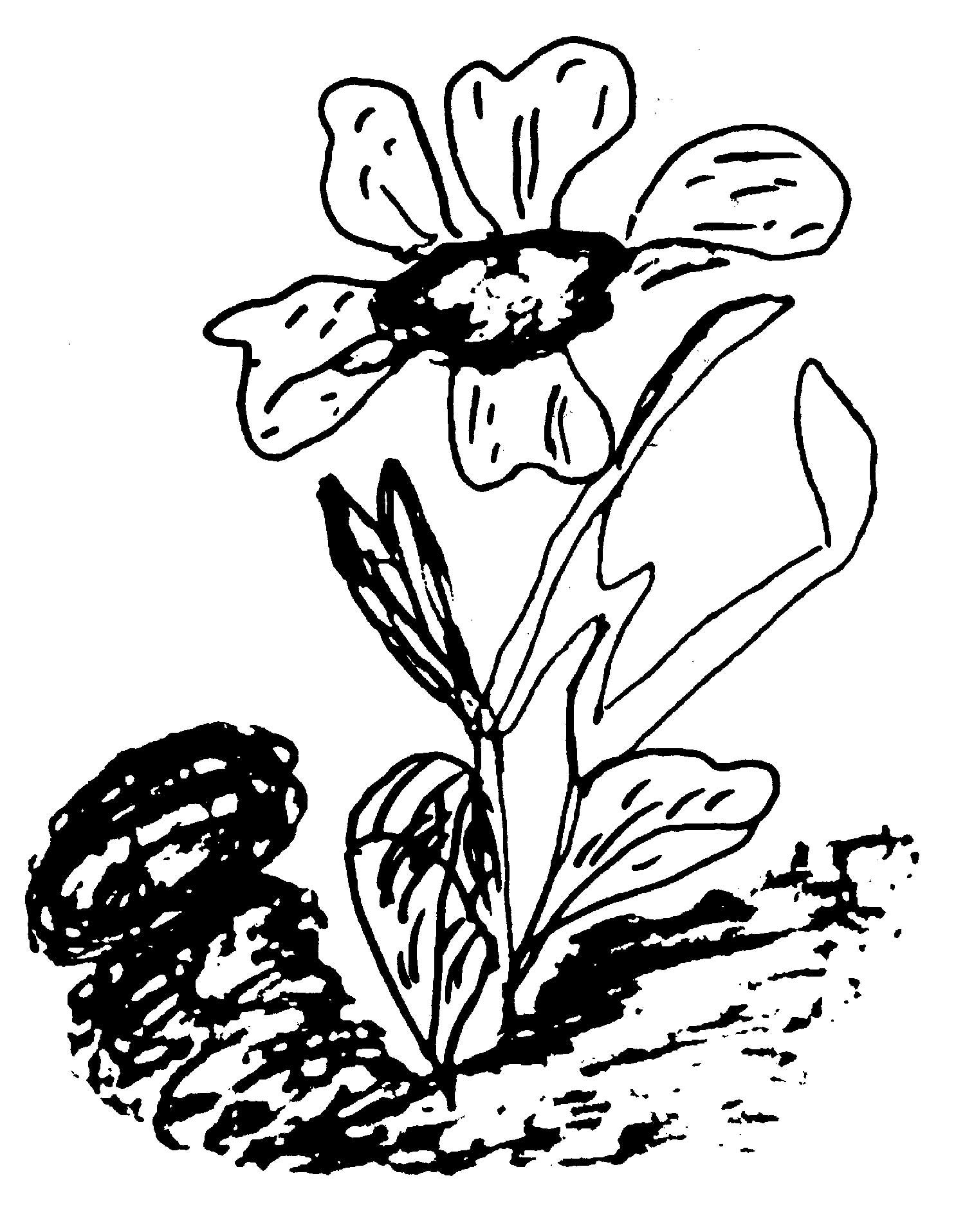 flower-drawing-2-sri-chinmoy