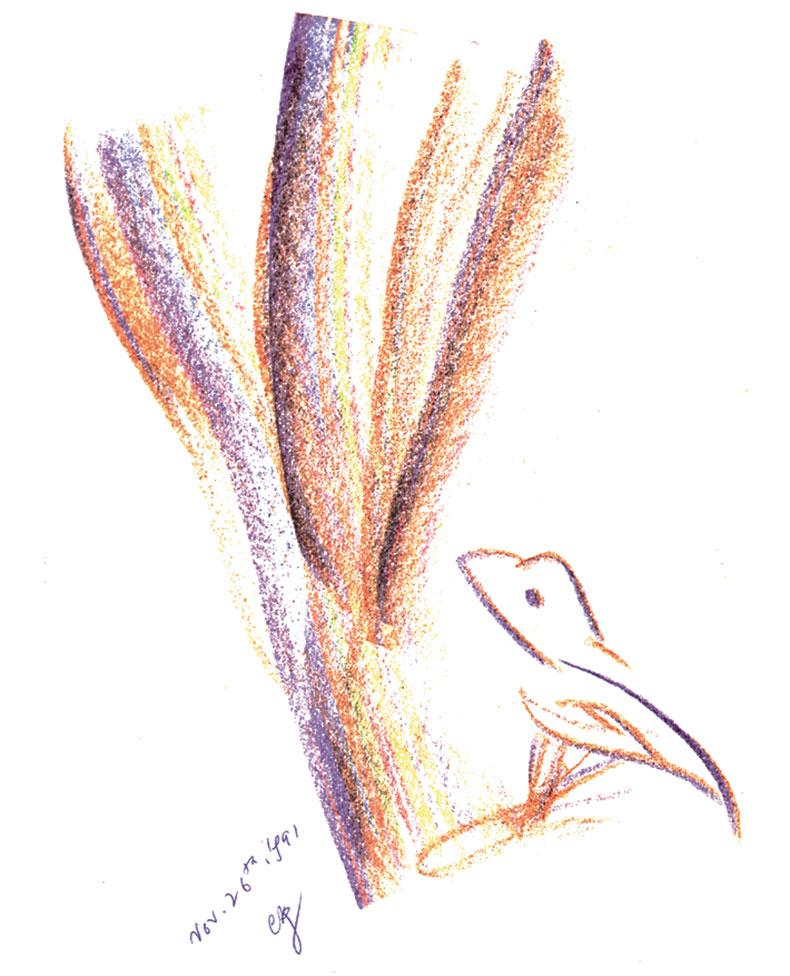 Bird-26-11-1991-5