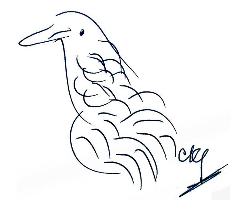 Bird-CKG-4