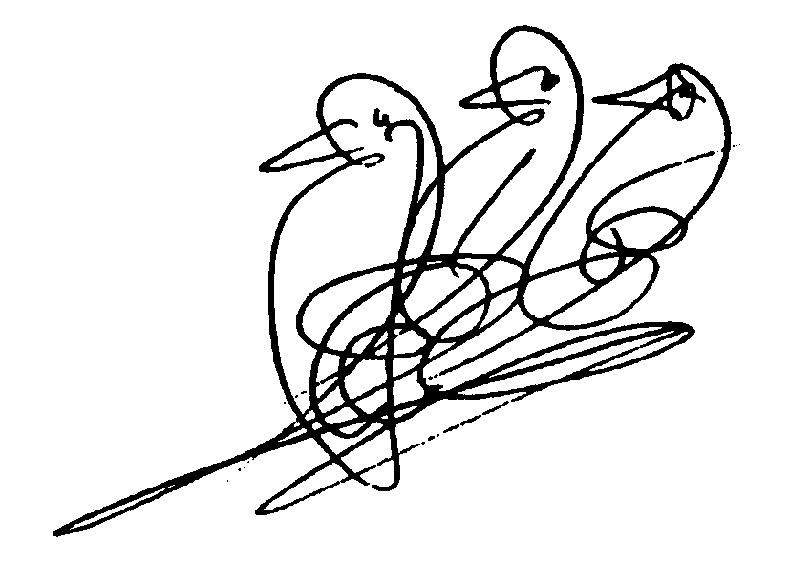 Birds-108-CKG