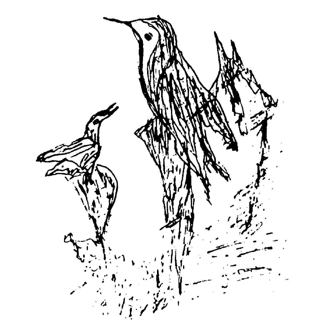 142-birds-ckg