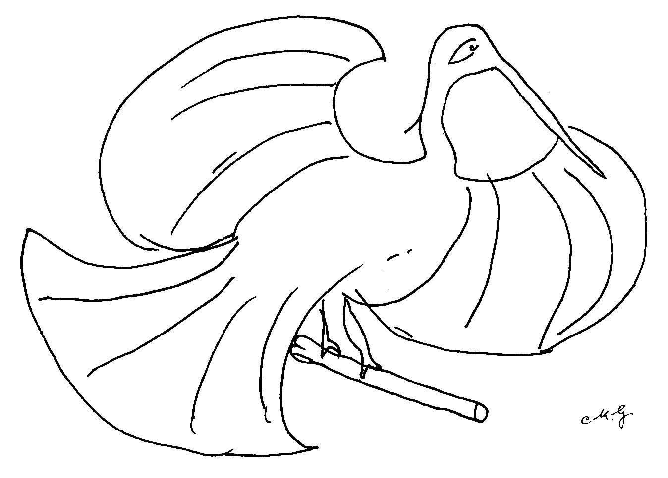 pelican-137a-ckg