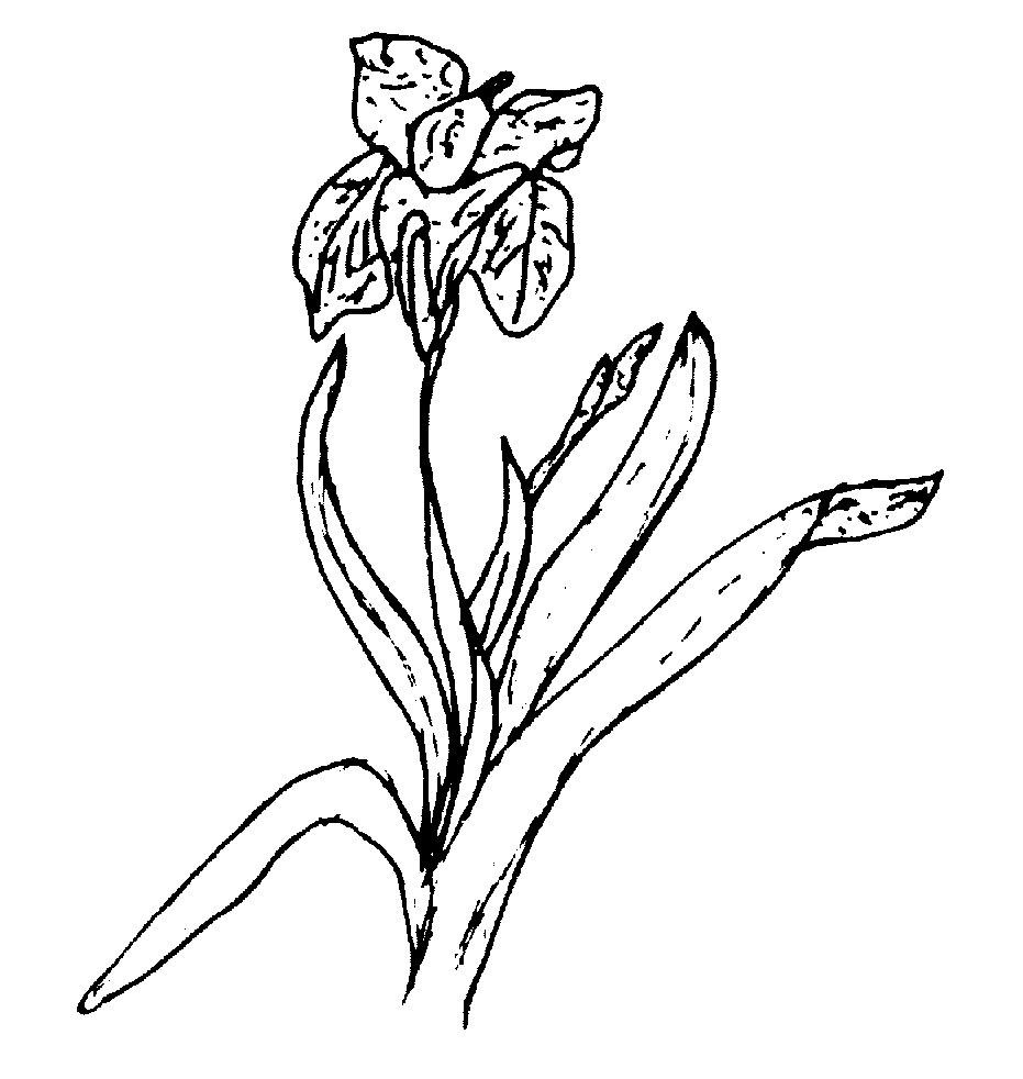 146-ckg,flower