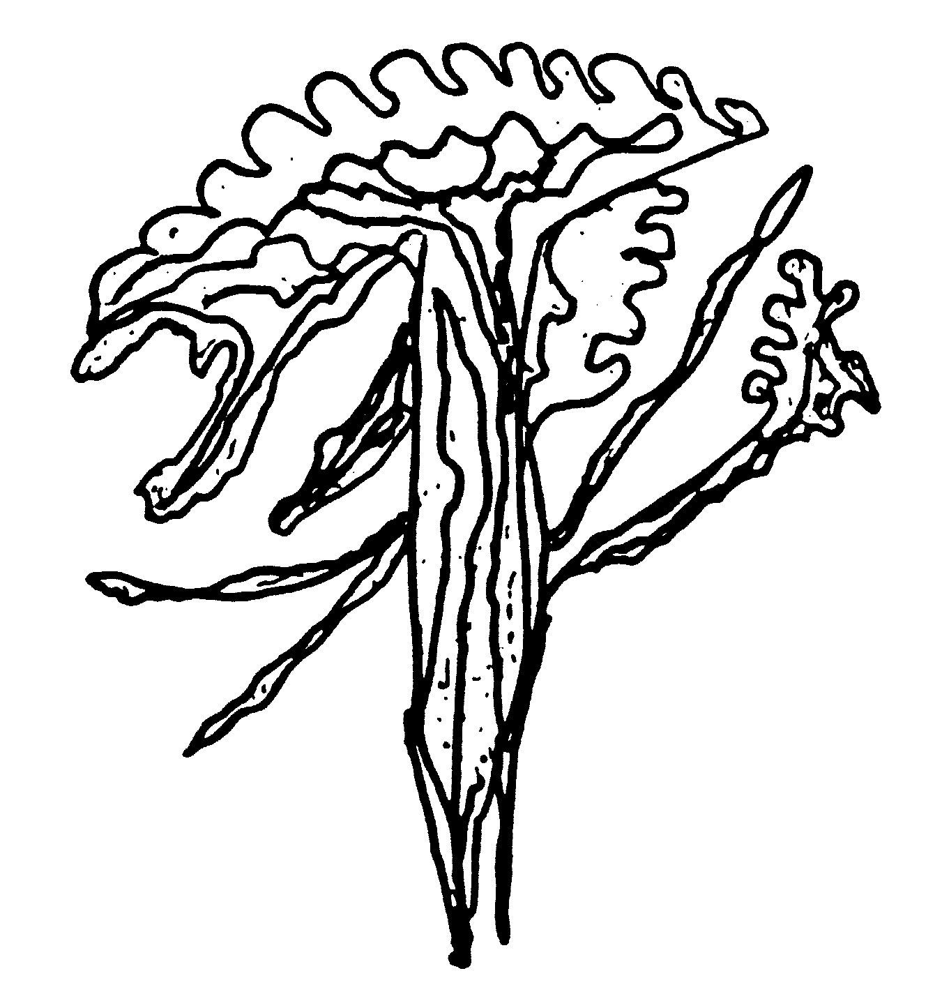 149-ckg-flower