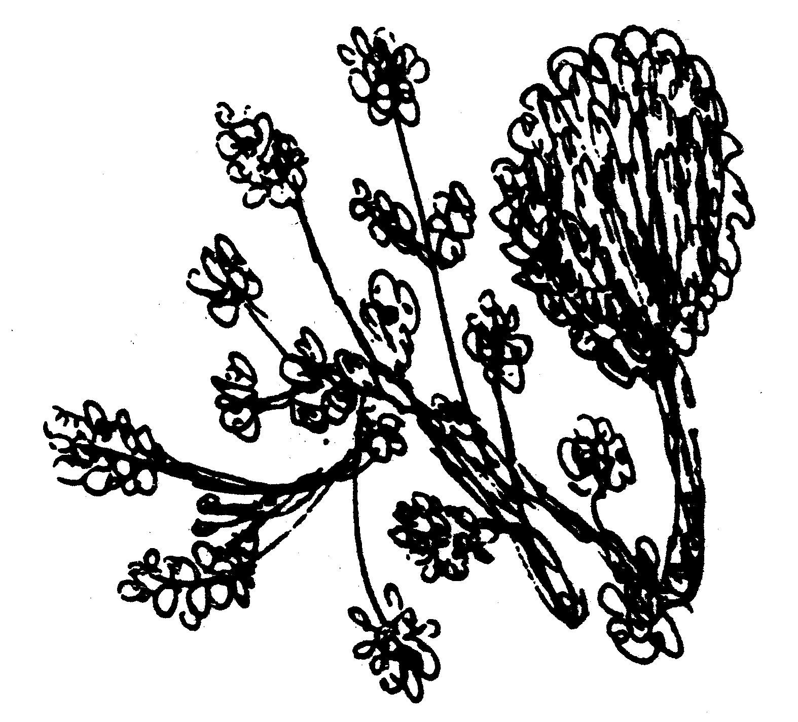 151-flowers-ckg