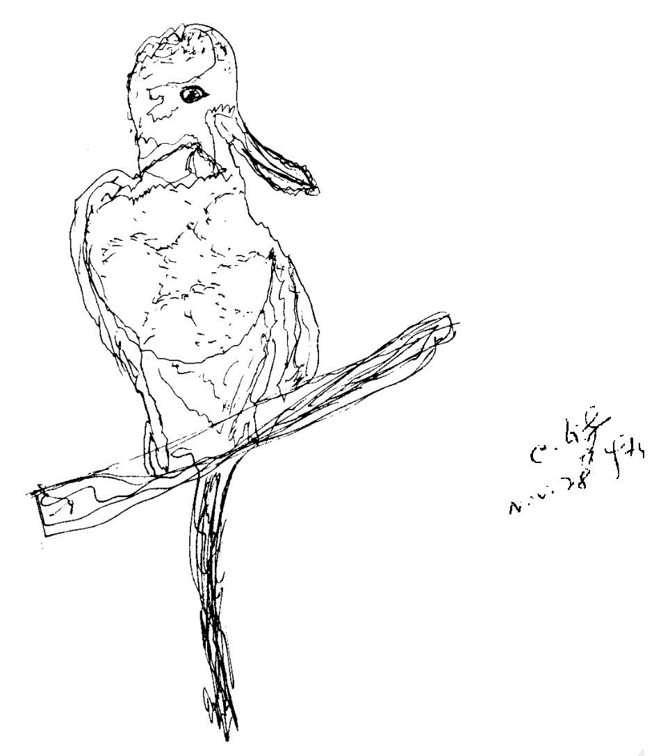 28-11-1974-ckg-bird