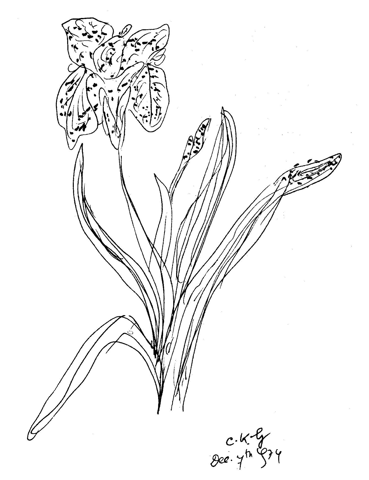 7-12-1974-flower-ckg