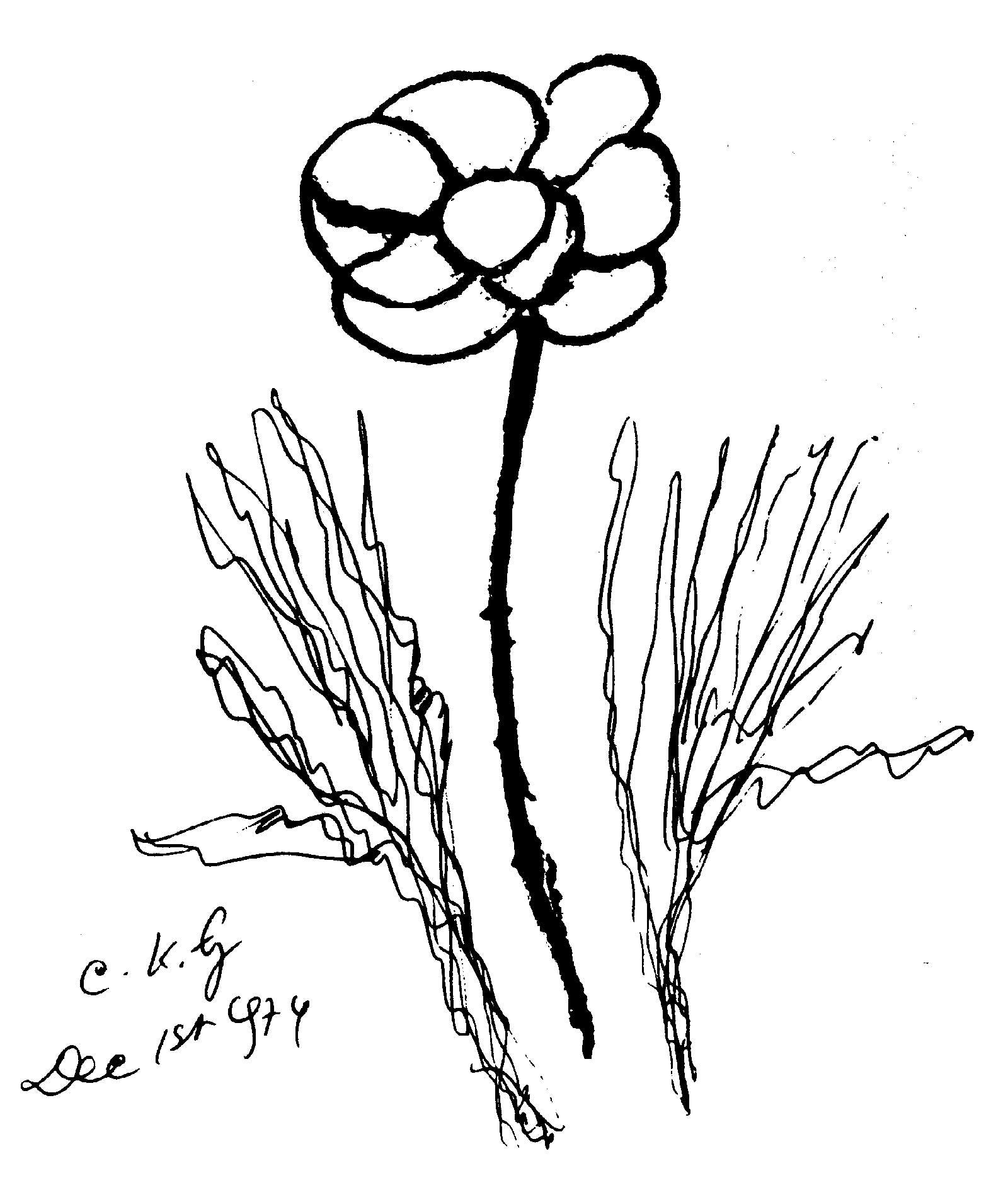 Flower-ckg-1-12-1974