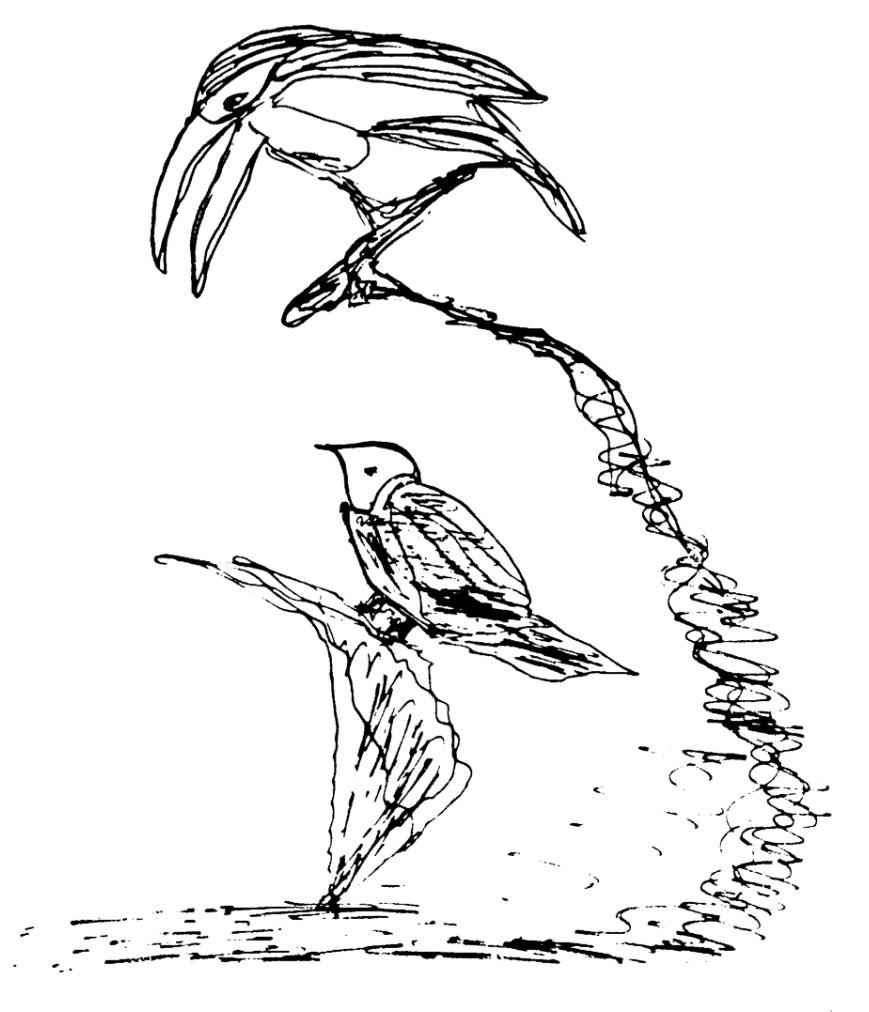 birds-1974-ckg