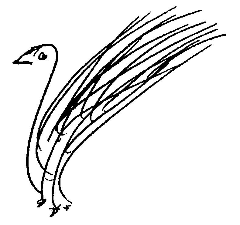 bird-167-ckg