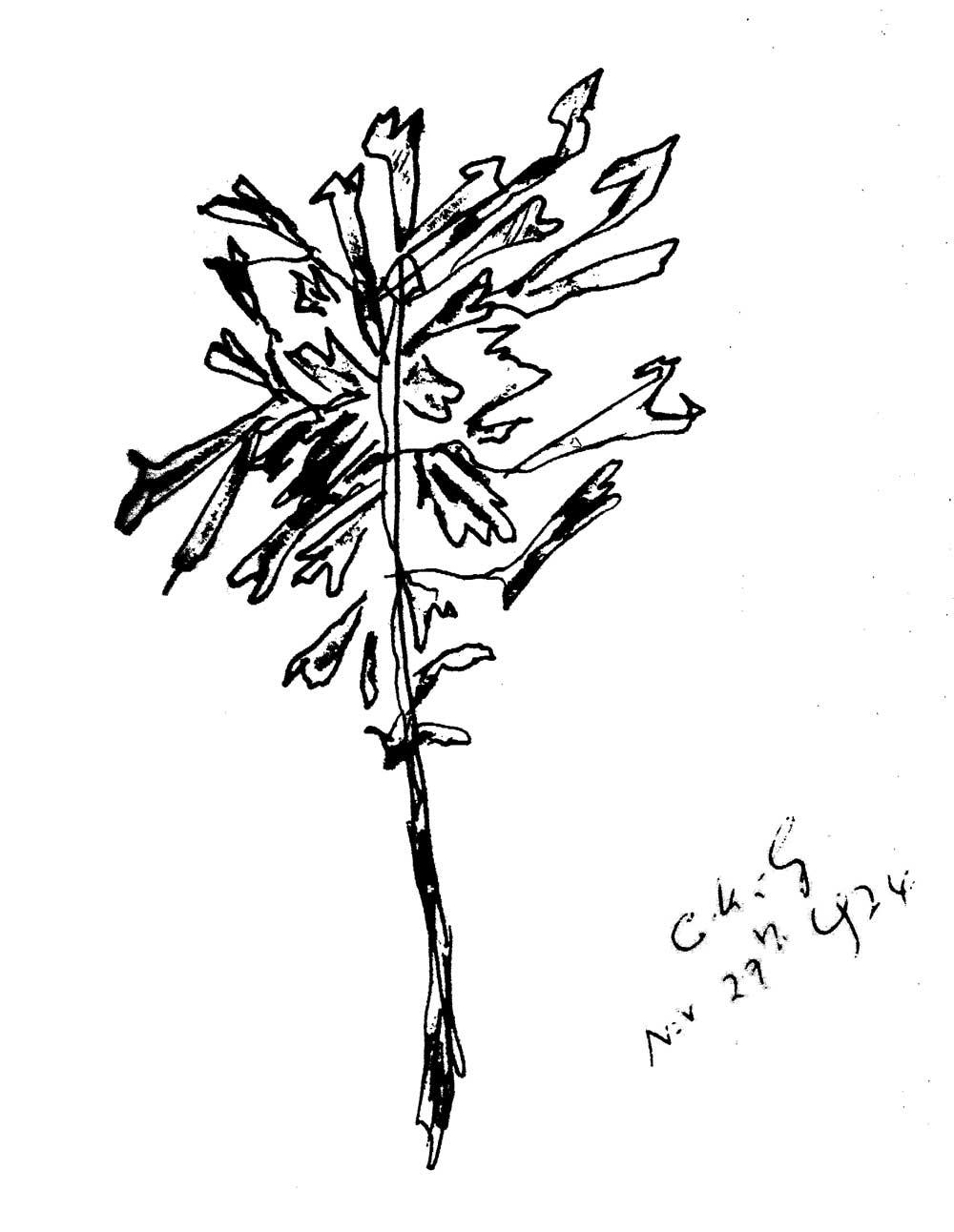 27-11-1974-sri-chinmoy